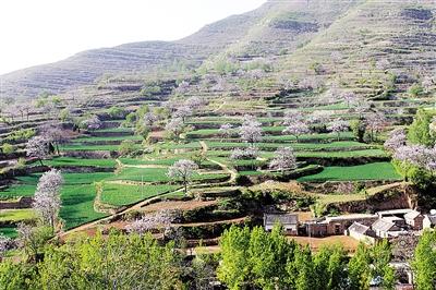 远山,白云,绿树,瓦房,阳光下的郏县茨芭镇空山洞村,花香洋溢,美不胜收